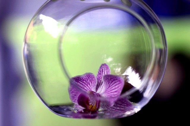 květ ve skle
